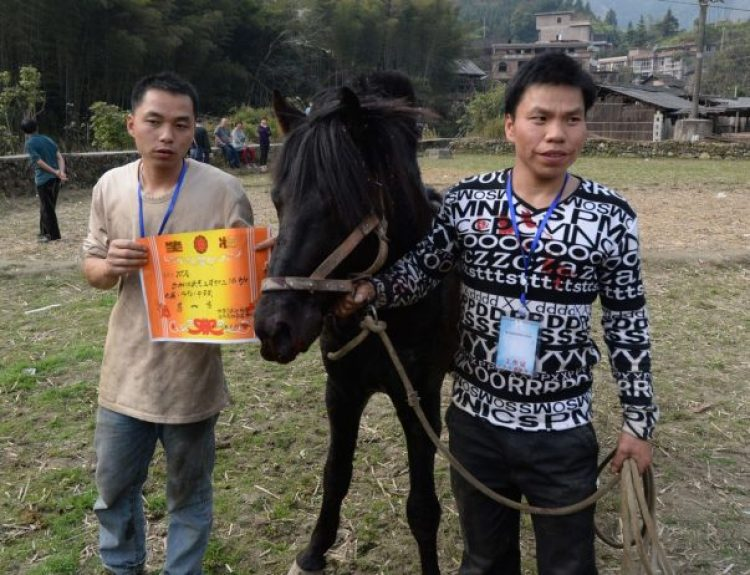 Horse Fighting in China6