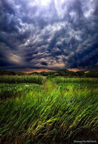 Disturbance Flickr