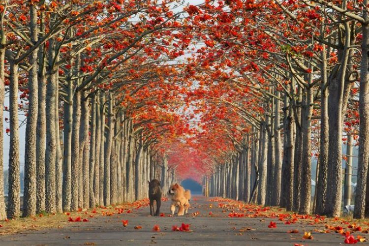 Cotton Tree Alley In Taiwan