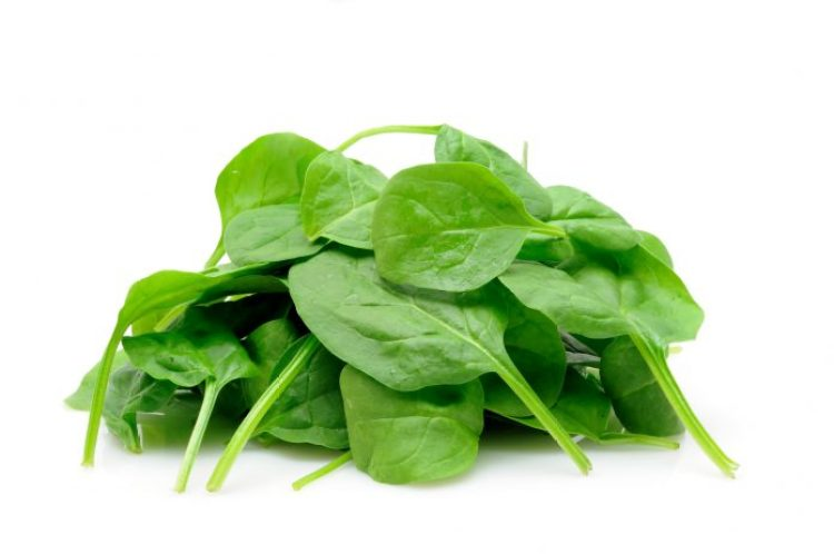 Spinach is regaining its popularity as a garden vegetable because more people are using it in salads