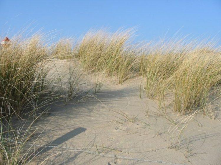 Maram dunes