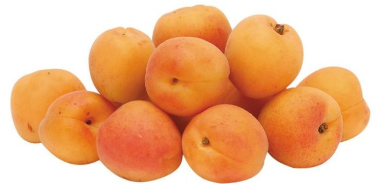 Apricots are beautifully orange colored fruits with full of beta-carotene & fiber that are one of the first signs of summer.
