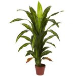The Tree like Dracaenas is Perfect When You Need a Strong Accent