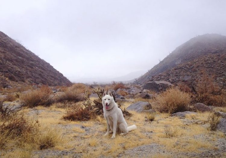 Foggy Morning in the Anza Borrego Desert, CA