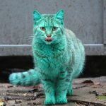 The Stray Cat Accidentally Turned Itself Green