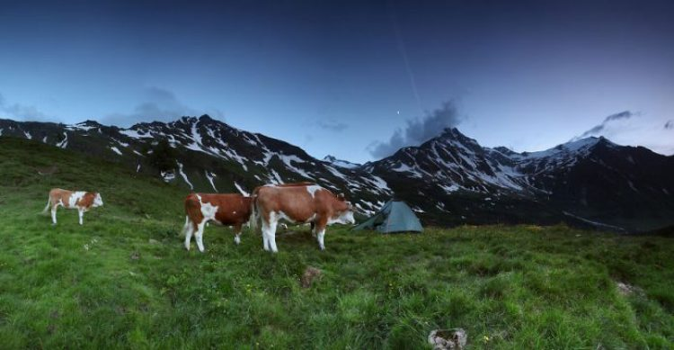 Hohe Tauern, 1,900m Alps, Austria