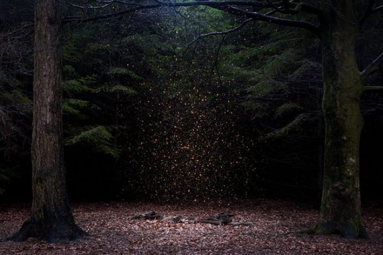 surreal-forest-photograhy-ellie-davis-7__880