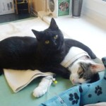 Unbelievable Nurse Cat Looks after Other Animals at Animal Shelter