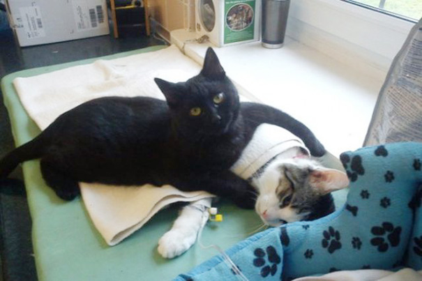 Cat helps other animals at this Polish shelter get better