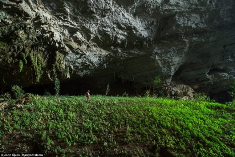 Suphaporn Singnakphum stands amongst lush low-light plants in an underground garden in a huge fossil passage that adjoins the inflow entrance of Tham Khuon Xe