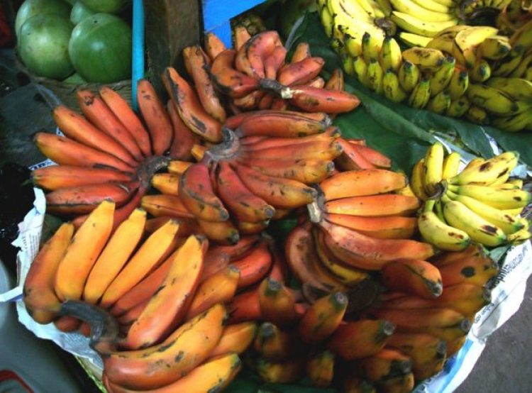 Red bananas at the market in Guatemala