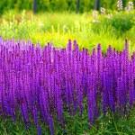 Five Rare Beautiful Flowers