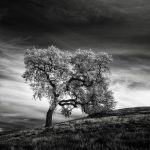 California Based Photographer Use Infrared Camera to Capture Stunning Desolate Landscapes