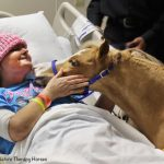 A Cute Miniature Horse Give Therapeutic Benefits for People When They're Really in Need of Them
