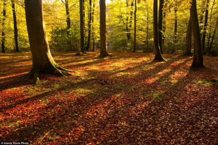 During half term, visitors can choose from 80 expert-led walks through beautiful autumn landscapes at the park's Walking Festival