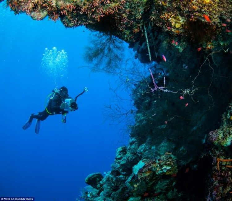 If you wish to hone your diving skills, Padi certified instructors are on hand to help you explore the Guanaja reef