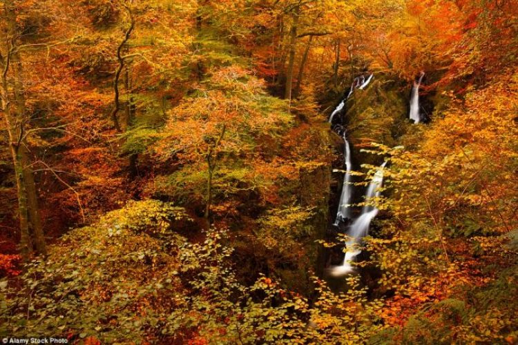 The cascading Ghyll Force waterfall looks particularly captivating when surrounded by a sea of orange and yellow hues