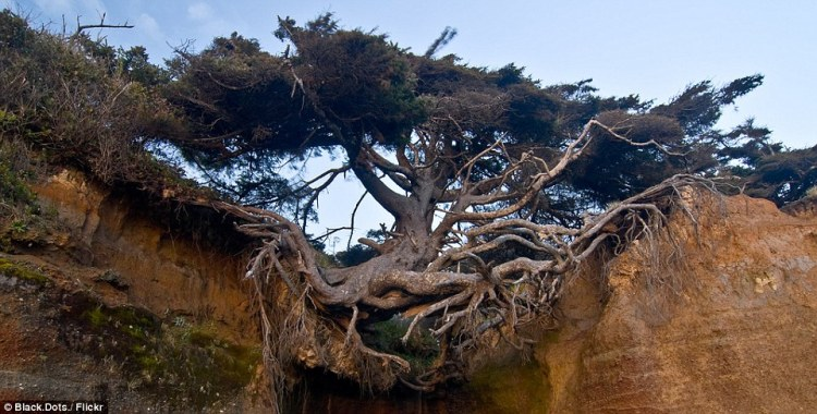Hanging on for dear life, the Tree of Life is stretched over a large void and has managed to attach in place by a few tough tendrils of root