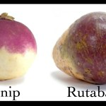 How to Grow Turnips and Rutabagas