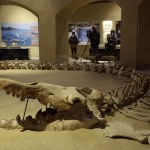 First Ever Fossil Museum Opens in Egypt