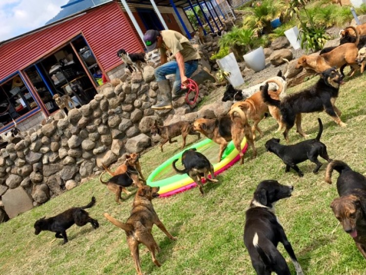 "The dogs of ""Territorio de Zaguates"" spend most of their time basking in the sun and relishing the cool Costa Rican breezes, but they also have access to a modern indoor facility."