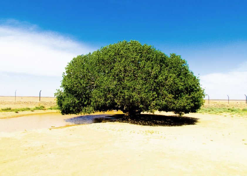 The Blessed Tree of Jordan