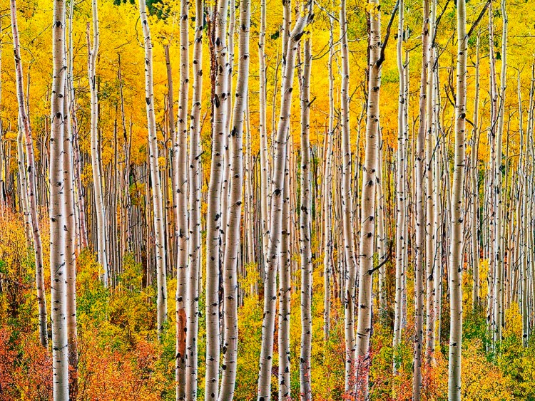 "The Pando or ""The Trembling Giant"" is a massive grove of quaking aspens that takes the ""forest as a single organism"" metaphor and literalizes it."