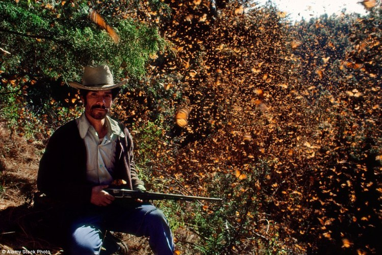 An armed guard protecting monarch butterflies during their winter season in Michoacan, Mexico