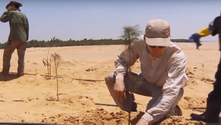 German scientists have collaborated with the Egyptian government to create a natural miracle by using ingenuity assisted by biology, the Serapium Forest in the middle of the desert, just two hours from Cairo.