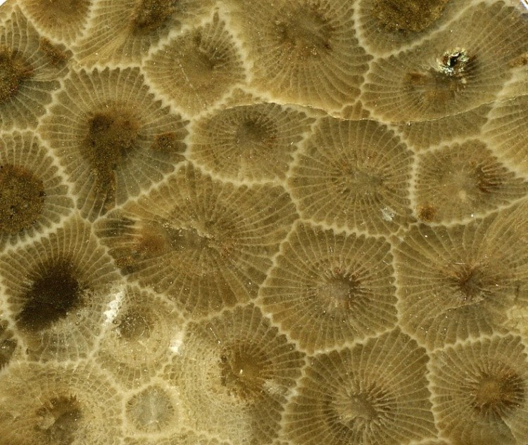 The Petoskey stones were molded as a result of glaciation, in which sheets of ice scrapped the bedrock, gathering up fragments, and then grinding off their uneven edges and putting them in the northwestern portion of Michigan's Lower Peninsula.
