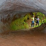 Giant Tunnels Dug by Massive Sloths