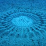 Mysterious Underwater 'Crop Circles'