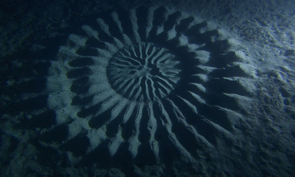 One day, Ookata found something strange near Amami Oshima, which he had never been witnessed before, rippling geometric sand patterns almost 6 feet in diameter, 80 feet below sea level.