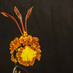 The Butterfly Orchid