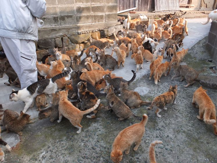"Aoshima island, is famous as ""Cat Island"", actually a small island, where there are expressively more feline residents than people and inhabited by 15 people and hundreds of cats."
