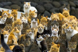 The cats were primarily introduced to the island to prevent mice from chewing through fishing nets Image credit NITRONAT