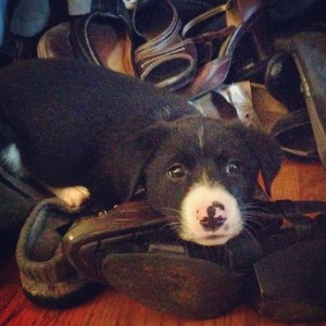 """""""I can has shoes?"""""""