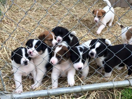Cutest Puppy Litter in the Whole World