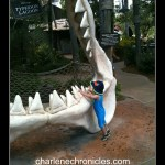 How to Swim with the Sharks at the Typhoon Lagoon Shark Reef