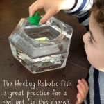 Robotic Fish With Bowl: Hexbug Aquabot