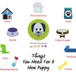 The Essentials You Need for a New Puppy