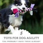 Five Fun Finds for Dog Agility at Home