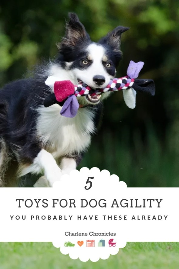 Five toys for dog agility by Charlene Chronicles