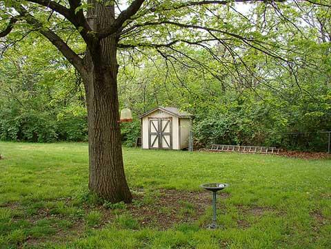 backyard-trees.jpg