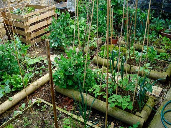 prepare-garden-winter.jpg