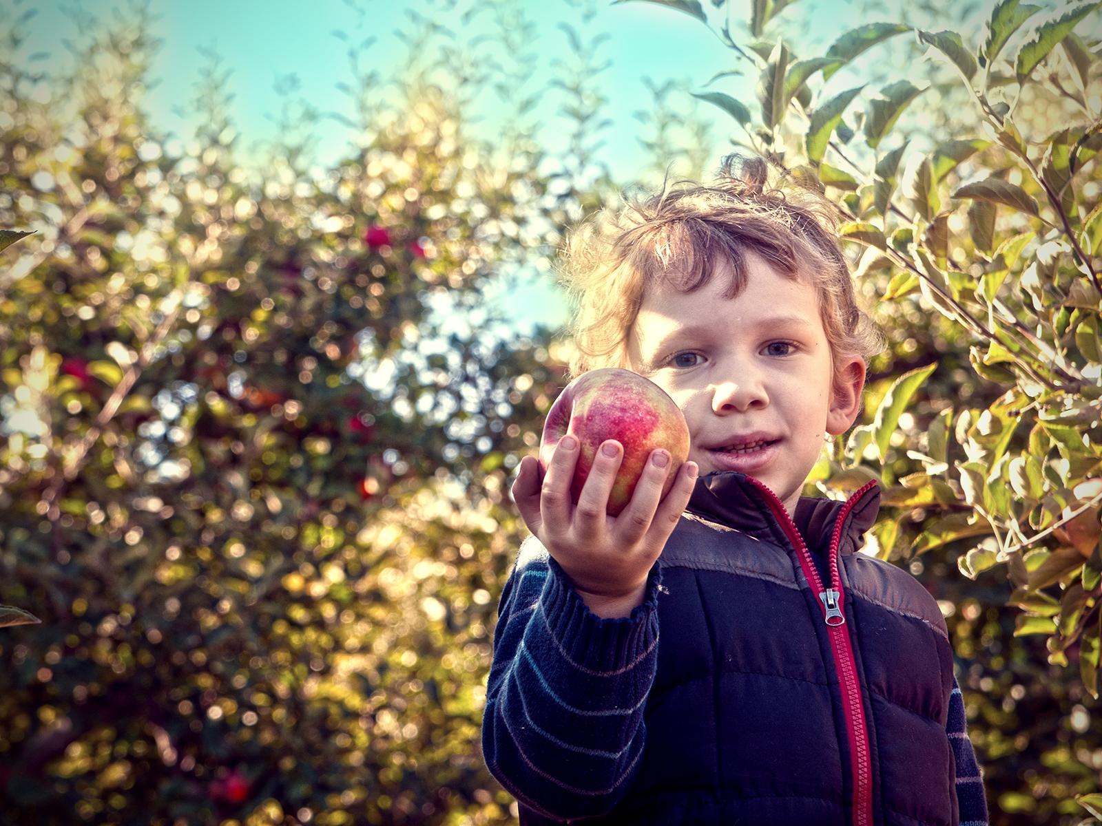 Love Those Apples. charles i. letbetter