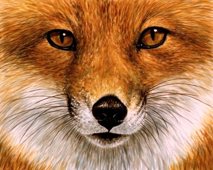 Red Fox Face
