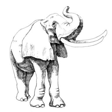 African Elephant with Raised Trunk, ink