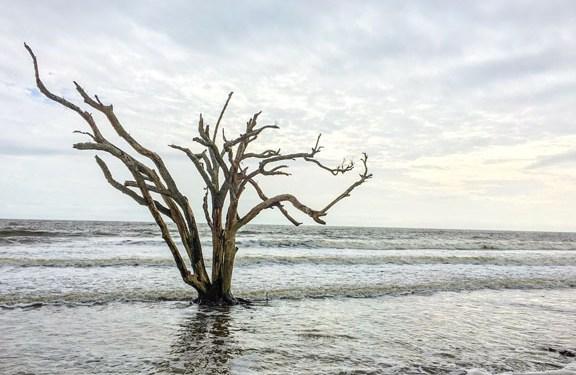 Steven Ives – August 2017 – Featured Artist