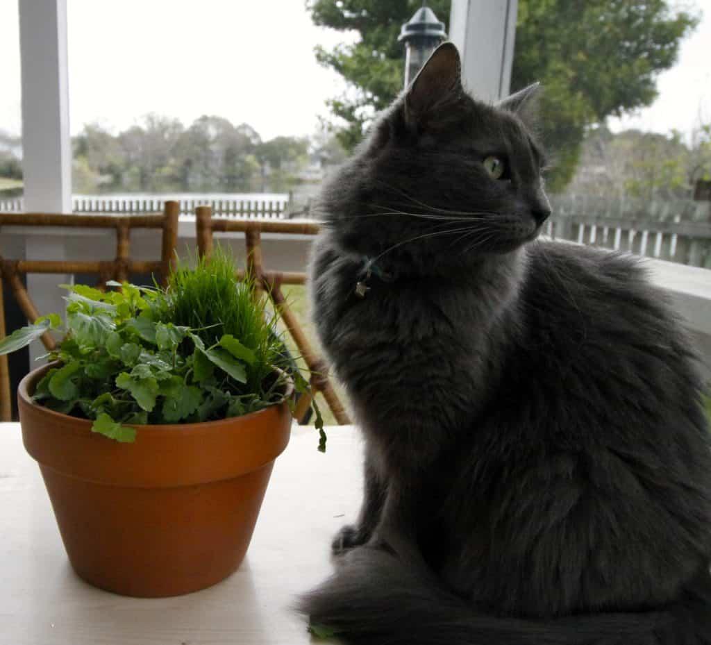 Diy Pet Grass Amp Cat Nip Cat Garden